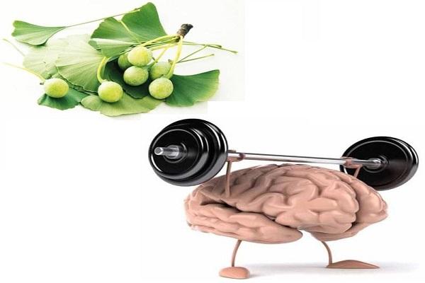 Viên uống từ lá bạch quả hỗ trợ não bộ chịu nhiều áp lực