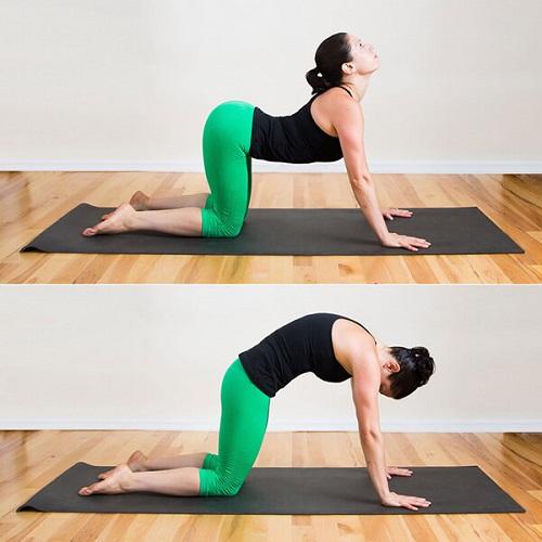 Bài tập yoga tư thế con mèo giúp chữa đau thắt lưng