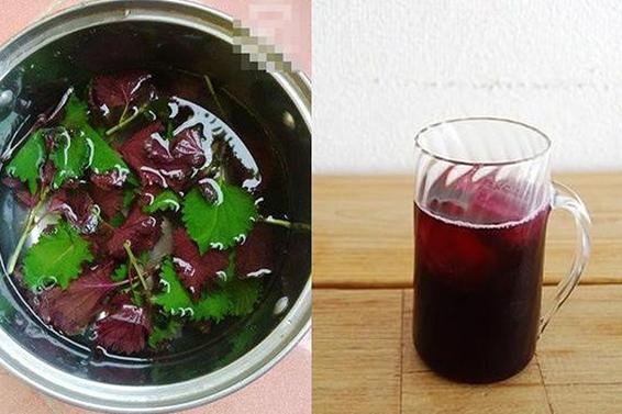 Uống nước lá tía tô có tác dụng giảm cân, giảm mỡ
